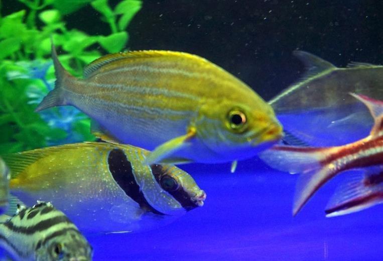 观赏鱼有哪些繁殖方式?观赏鱼繁殖方法